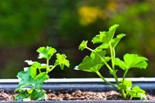 Free Fresh Green Plant In Pot Royalty Free Stock Photography - 20081357