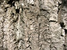 Free Structure Of Bark Of A Tree Royalty Free Stock Image - 20082786