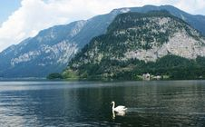 Lake In The Alpes - Austria Royalty Free Stock Photo