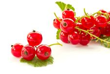 Free Redcurrant Royalty Free Stock Image - 20084106