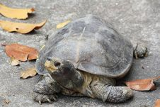 A Hundred Tortoise S Ages Royalty Free Stock Photography