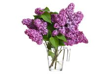 Free Bouquet Of Spring Purple Lilac Royalty Free Stock Photography - 20084817
