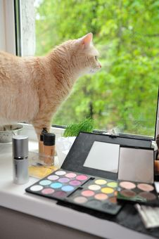 Free Makeup And Cat Stock Photo - 20085070