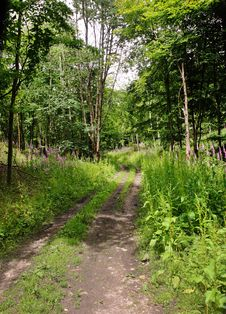 Free Track Though English Woodland Stock Photos - 20085893