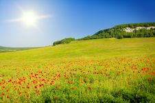 Free Big Field Of Flowers On Sunrise. Royalty Free Stock Photography - 20086187