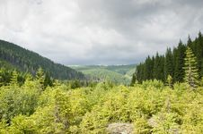 Free Young Green Mountain Forest In A Summer Day Royalty Free Stock Image - 20088046