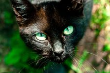Free Black Cat Stock Photography - 20088222