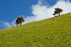 Free Two Green  Tree Stock Photo - 20088540