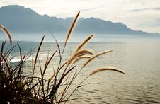 Free Lake Of Geneva -Montreux Stock Photo - 20089060