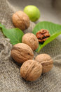 Free Walnuts Stock Photography - 20092942