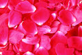 Free Red Rose Petals Royalty Free Stock Image - 20096586