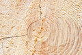 Free Wood Circles Detail Royalty Free Stock Photo - 20096645