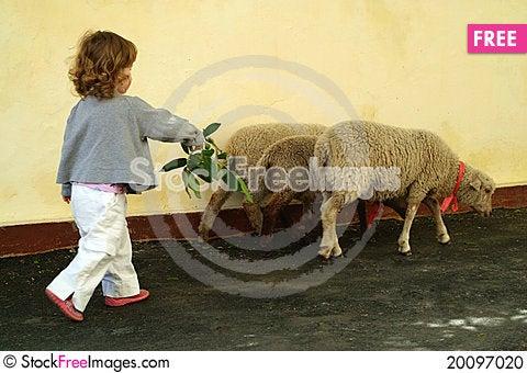 Free The Little Girl Grazing Three Lambs Stock Photo - 20097020