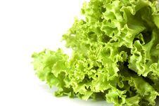 Free Lettuce, Salad Vegetable Royalty Free Stock Image - 20092746
