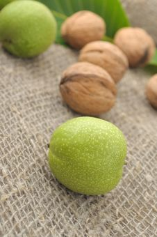 Free Walnuts Royalty Free Stock Images - 20093019