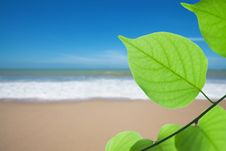 Free Green Leaf On Beach Royalty Free Stock Image - 20093556