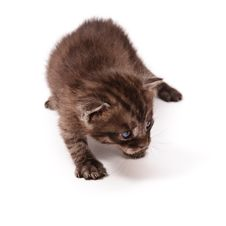 Free Small Kitten Royalty Free Stock Images - 20095229