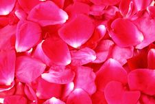 Free Red Rose Petals Royalty Free Stock Image - 20096586