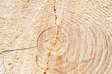 Free Wood Circles Detail Royalty Free Stock Photo - 20096645