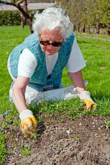 Free Senior Woman In Garden Stock Images - 20096854