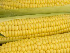 Free Fresh Corn Royalty Free Stock Image - 20098556