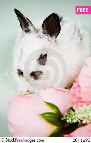 Free Easter Scene Stock Photos - 2011693