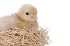 Free Baby Chicken In Her Nest Royalty Free Stock Images - 2012479