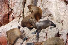 Free Seals 02 Stock Photos - 2013063