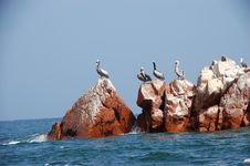 Free Pelicans Royalty Free Stock Images - 2013069