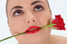 Free Isolated Portrait Of Beauty With Rose Royalty Free Stock Images - 2014329