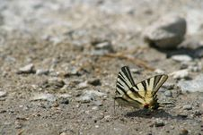 Free Butterfly Stock Photos - 2014483