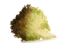 Free Lettuce Royalty Free Stock Photography - 2015627