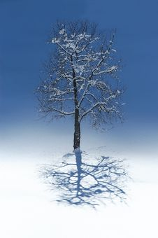Lonely Tree In Winter Stock Images