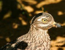Free Camouflaged Bird Royalty Free Stock Image - 2016586
