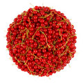 Free Red Currant Bunch Royalty Free Stock Photo - 20103635