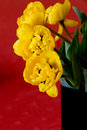 Free Yellow Tulips In A Black Vase Royalty Free Stock Photography - 20103887