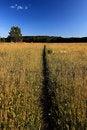 Free Pastoral Stock Photos - 20109373