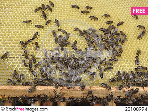 Bees in a beehive Stock Photo