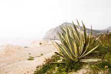 Free Agave Stock Photo - 20100200