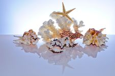 Free Marine Coral And Shells Royalty Free Stock Photo - 20100375