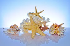 Free Marine Coral And Shells Stock Image - 20100441