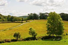 Free Three Trees In English Meadow. Royalty Free Stock Photos - 20100708