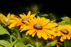 Free Bright Yellow Gerbera Daisies Stock Photo - 20101020