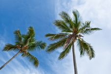 Free Forest Of Palms Under Blue Sky Stock Photos - 20101933
