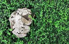 Stump In The Field Royalty Free Stock Images