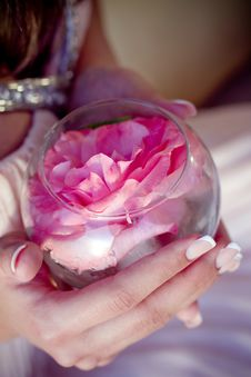 Free Beautiful Rosebud In Hands Stock Photo - 20103040