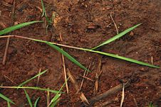 Free Grass Red Dirt Stock Photography - 20104412