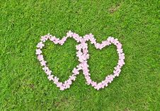 Free Pink Flower Love Heart Stock Photography - 20104482