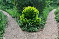 Free Pattern Composed By Path And Plant In Garden Stock Image - 20104661