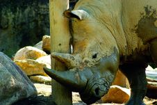 Free Rhino Stock Photography - 20105222